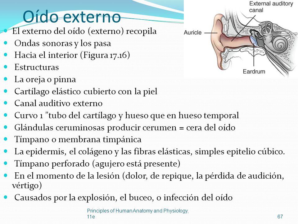 Oído externo El externo del oído (externo) recopila