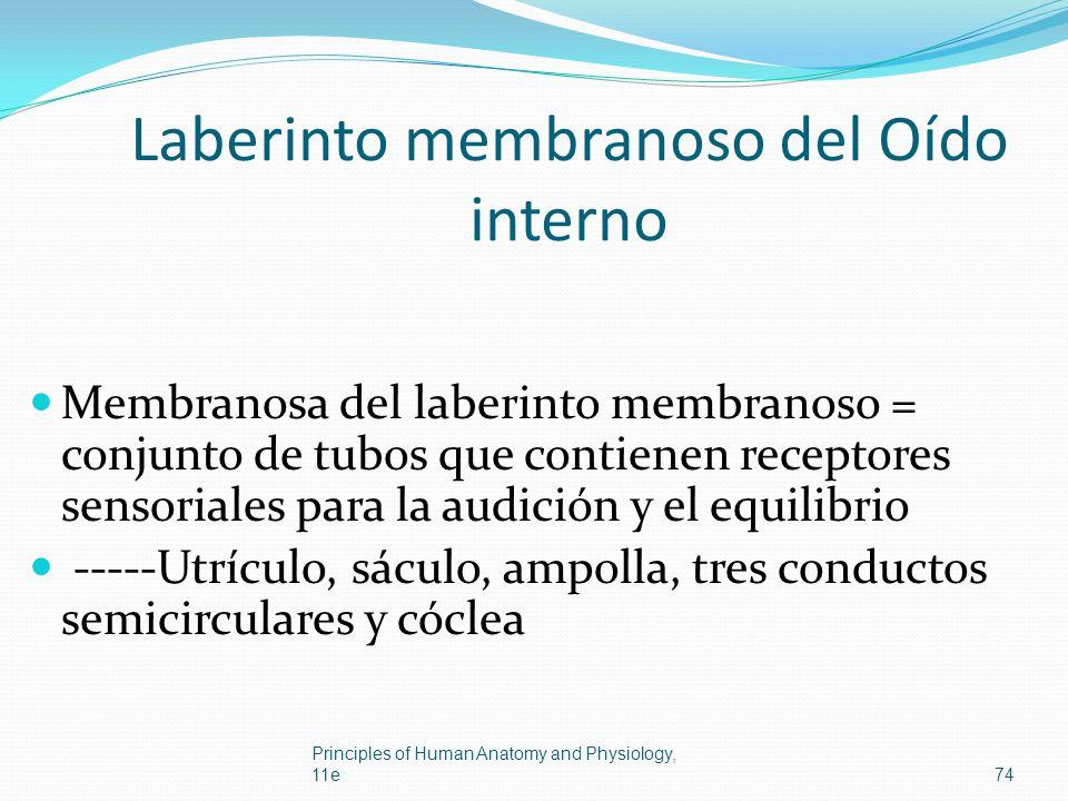 Laberinto membranoso del Oído interno