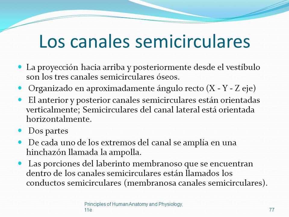 Los canales semicirculares