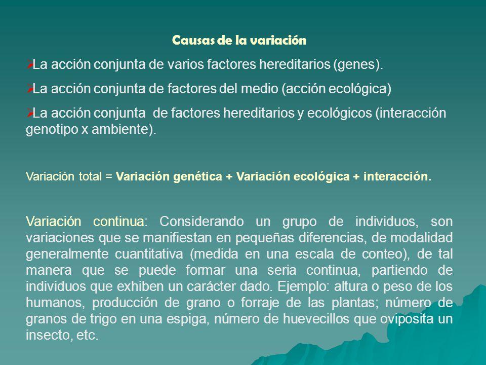 La acción conjunta de varios factores hereditarios (genes).