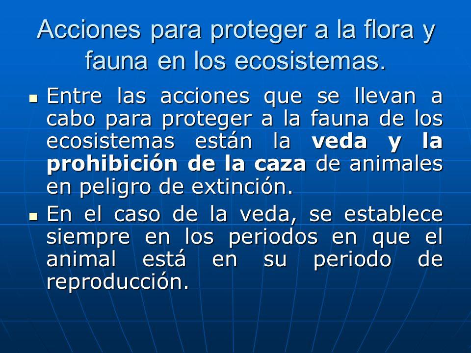 Acciones para proteger a la flora y fauna en los ecosistemas.