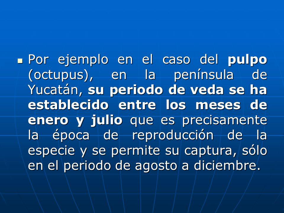 Por ejemplo en el caso del pulpo (octupus), en la península de Yucatán, su periodo de veda se ha establecido entre los meses de enero y julio que es precisamente la época de reproducción de la especie y se permite su captura, sólo en el periodo de agosto a diciembre.