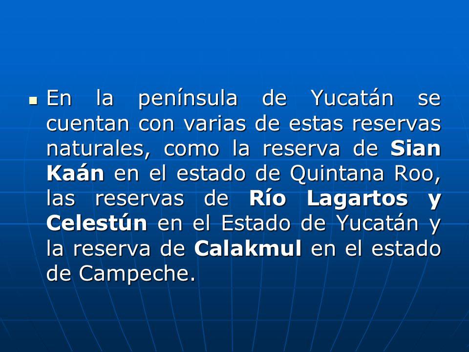 En la península de Yucatán se cuentan con varias de estas reservas naturales, como la reserva de Sian Kaán en el estado de Quintana Roo, las reservas de Río Lagartos y Celestún en el Estado de Yucatán y la reserva de Calakmul en el estado de Campeche.