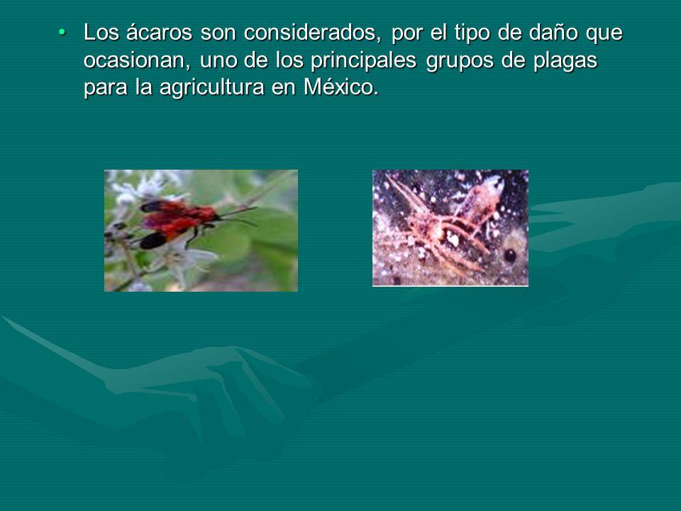 Los ácaros son considerados, por el tipo de daño que ocasionan, uno de los principales grupos de plagas para la agricultura en México.