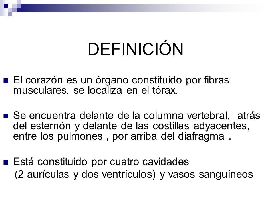 DEFINICIÓN El corazón es un órgano constituido por fibras musculares, se localiza en el tórax.