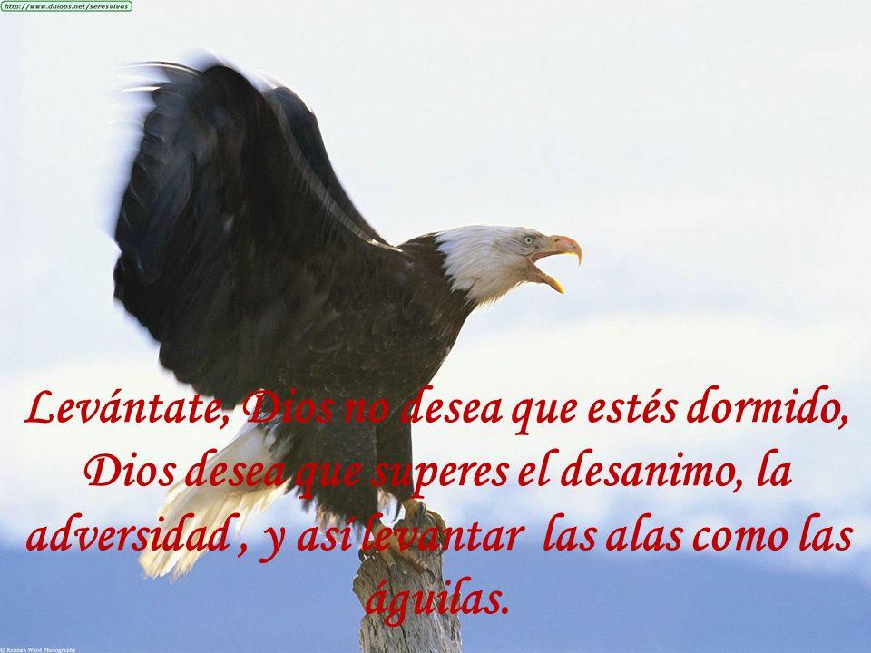 Levántate, Dios no desea que estés dormido, Dios desea que superes el desanimo, la adversidad , y así levantar las alas como las águilas.