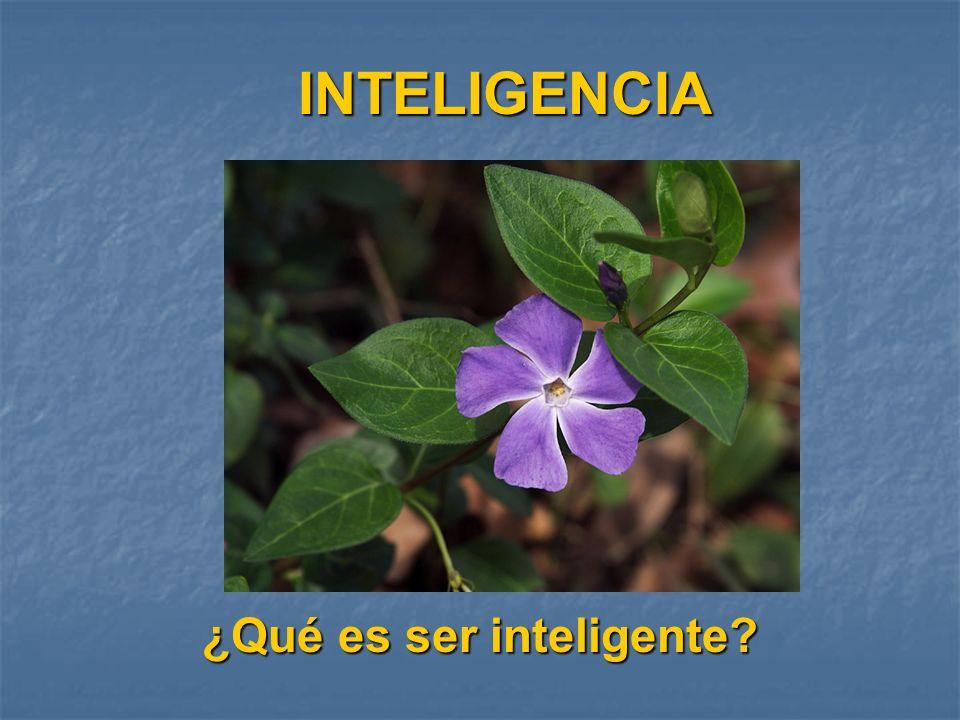 ¿Qué es ser inteligente