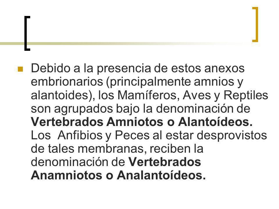 Debido a la presencia de estos anexos embrionarios (principalmente amnios y alantoides), los Mamíferos, Aves y Reptiles son agrupados bajo la denominación de Vertebrados Amniotos o Alantoídeos.