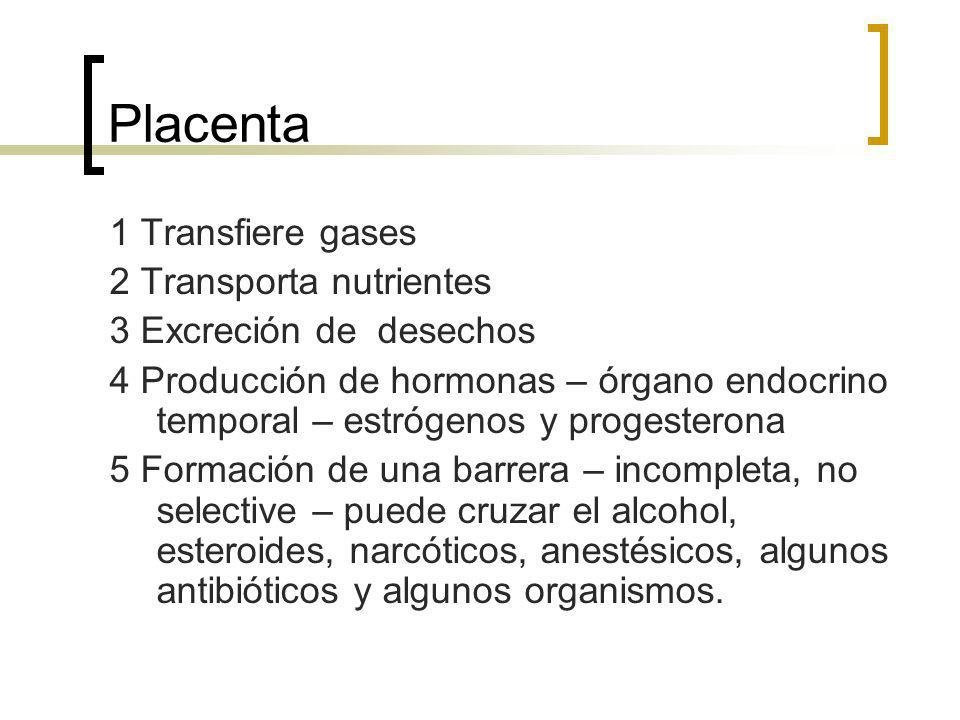 Placenta 1 Transfiere gases 2 Transporta nutrientes