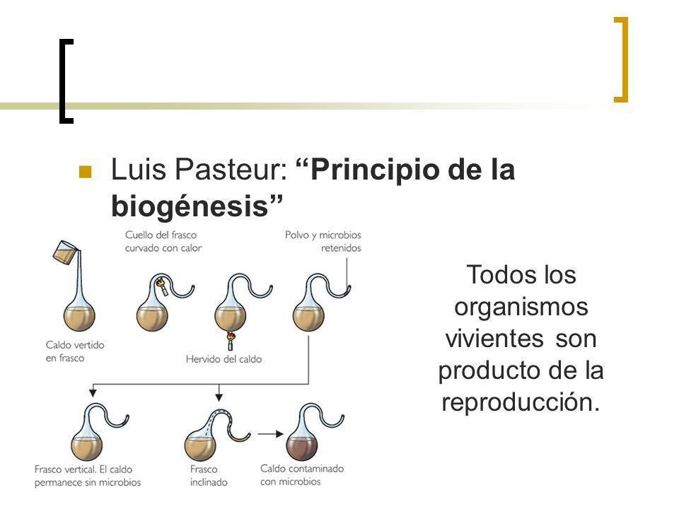 Todos los organismos vivientes son producto de la reproducción.