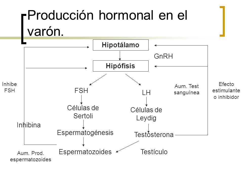 Producción hormonal en el varón.