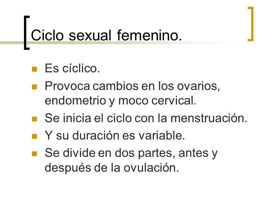 Ciclo sexual femenino. Es cíclico.