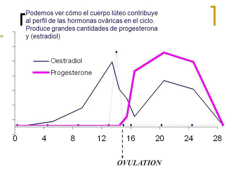 Podemos ver cómo el cuerpo lúteo contribuye al perfil de las hormonas ováricas en el ciclo. Produce grandes cantidades de progesterona y (estradiol)