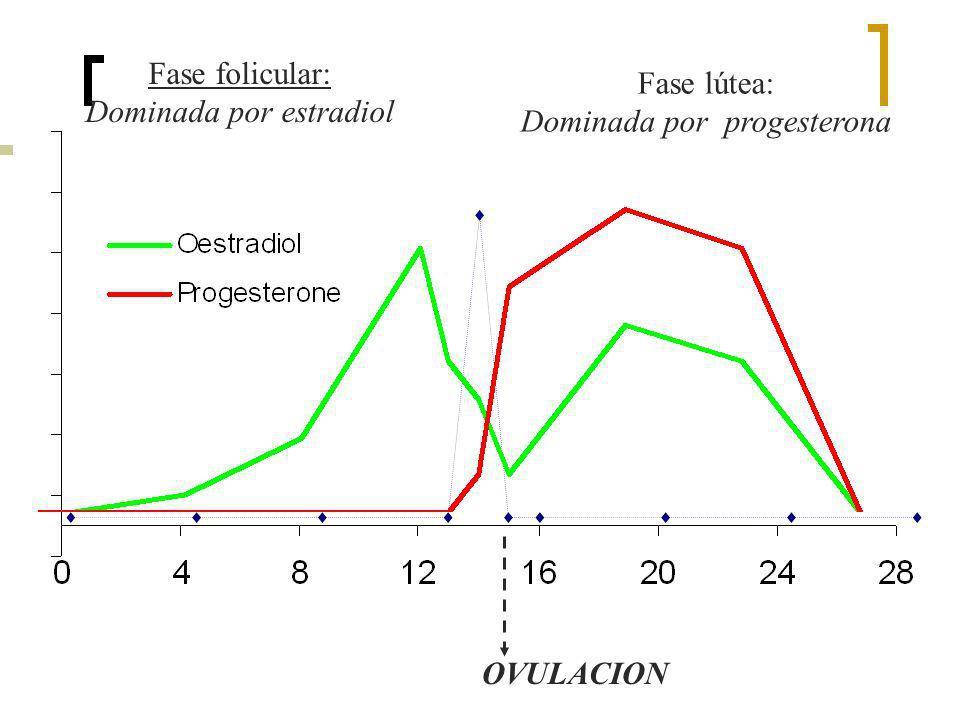 Dominada por estradiol Fase lútea: Dominada por progesterona