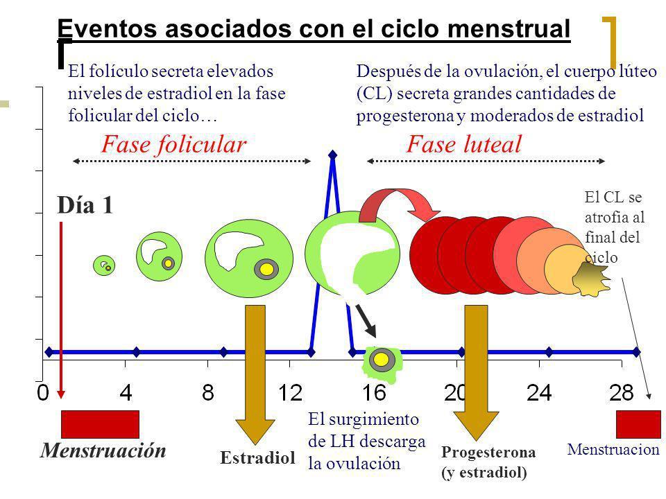 Eventos asociados con el ciclo menstrual