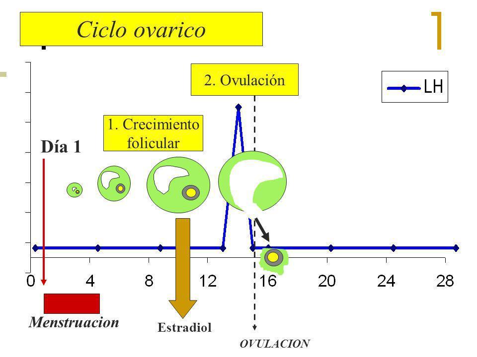 Ciclo ovarico Día 1 2. Ovulación 1. Crecimiento folicular Menstruacion