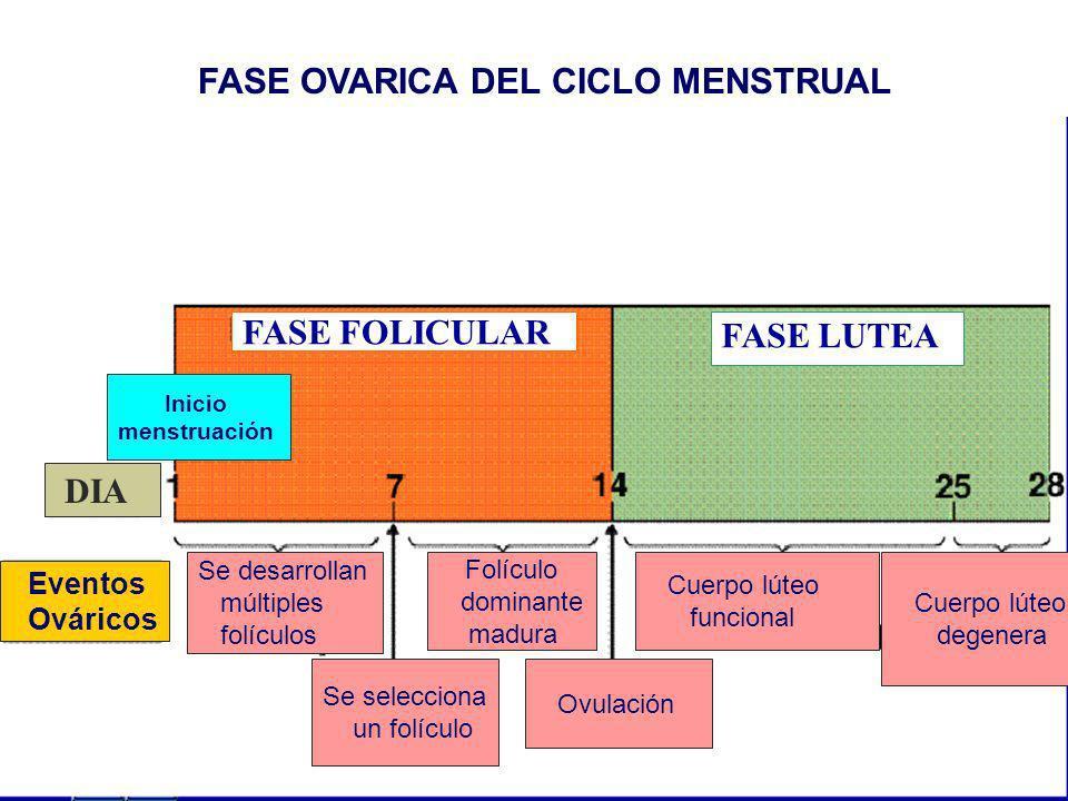 FASE OVARICA DEL CICLO MENSTRUAL