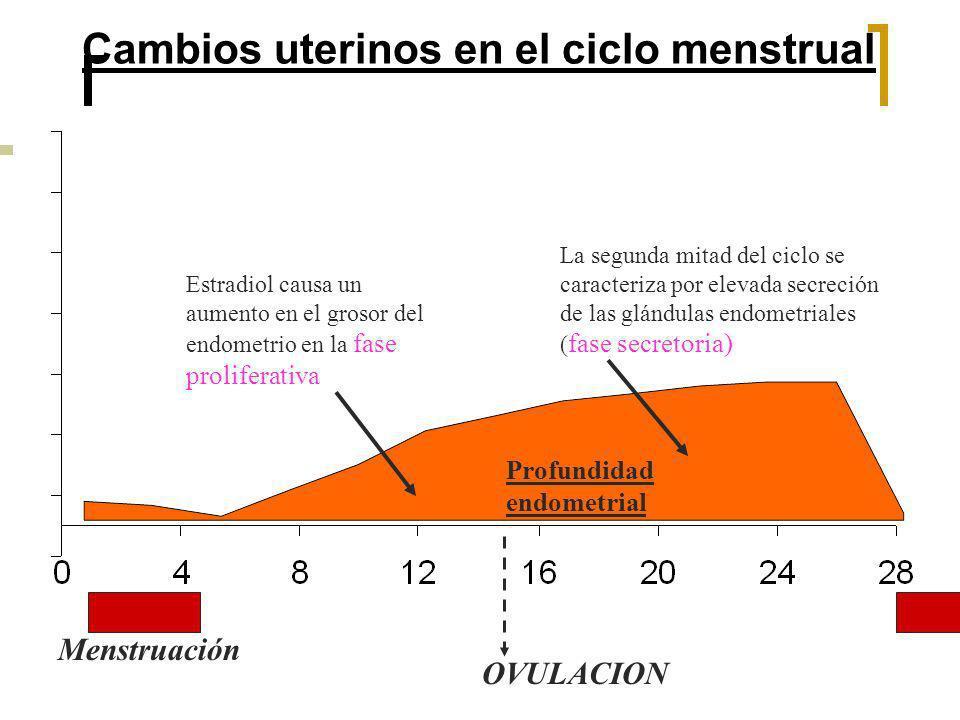 Cambios uterinos en el ciclo menstrual