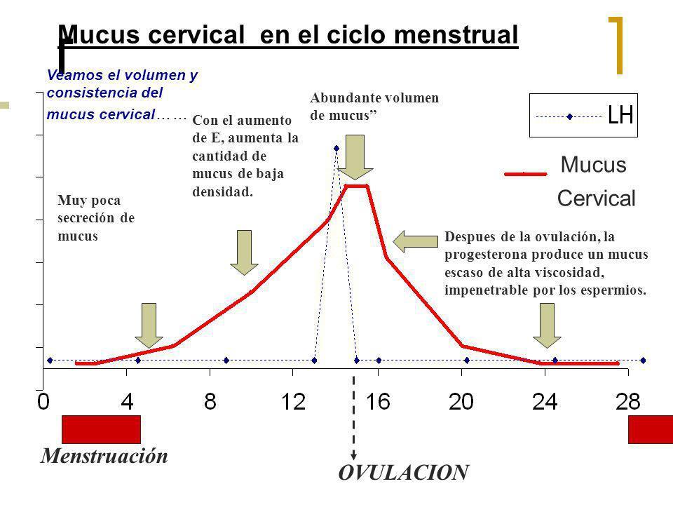 Mucus cervical en el ciclo menstrual