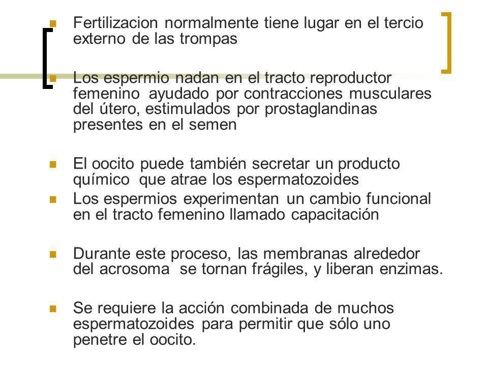 Fertilizacion normalmente tiene lugar en el tercio externo de las trompas