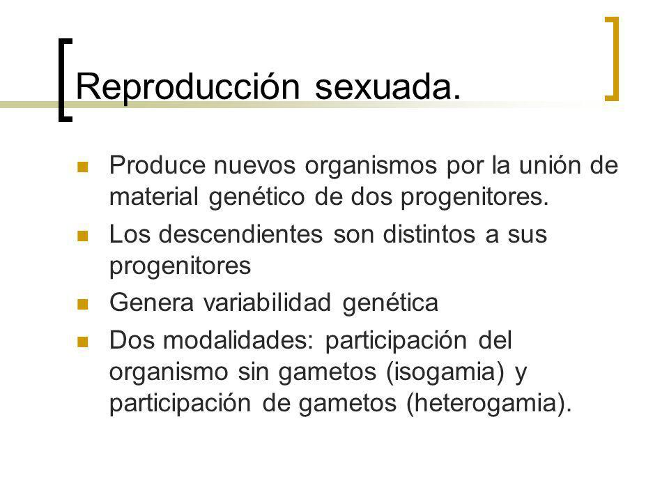 Reproducción sexuada. Produce nuevos organismos por la unión de material genético de dos progenitores.
