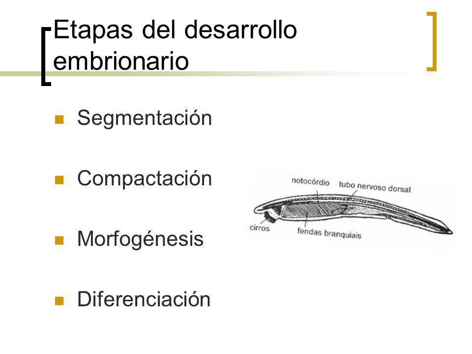 Etapas del desarrollo embrionario