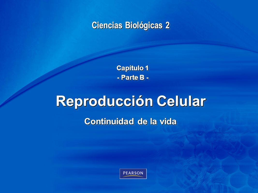 Reproducción Celular Continuidad de la vida