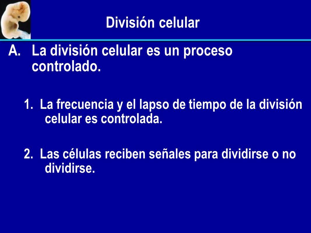 La división celular es un proceso controlado.