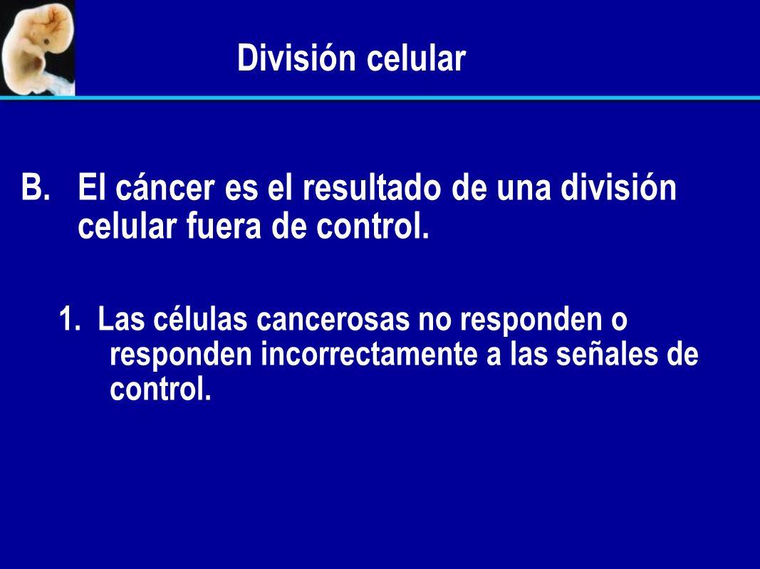El cáncer es el resultado de una división celular fuera de control.