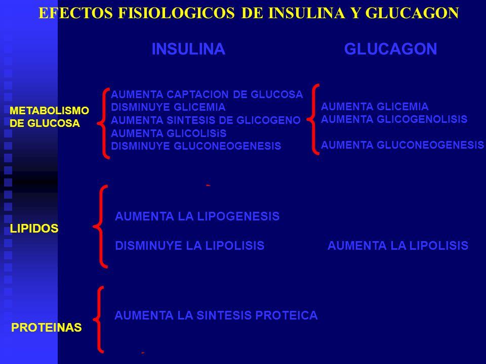 EFECTOS FISIOLOGICOS DE INSULINA Y GLUCAGON