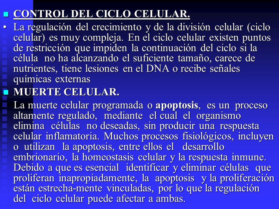 CONTROL DEL CICLO CELULAR.