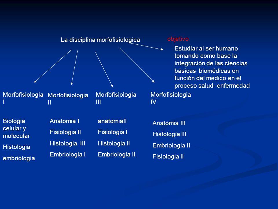 La disciplina morfofisiologica