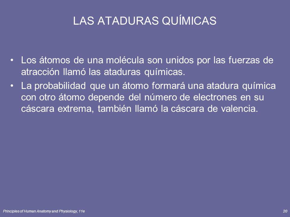 LAS ATADURAS QUÍMICAS Los átomos de una molécula son unidos por las fuerzas de atracción llamó las ataduras químicas.