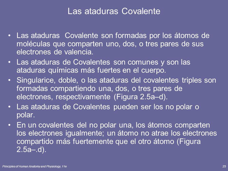 Las ataduras Covalente