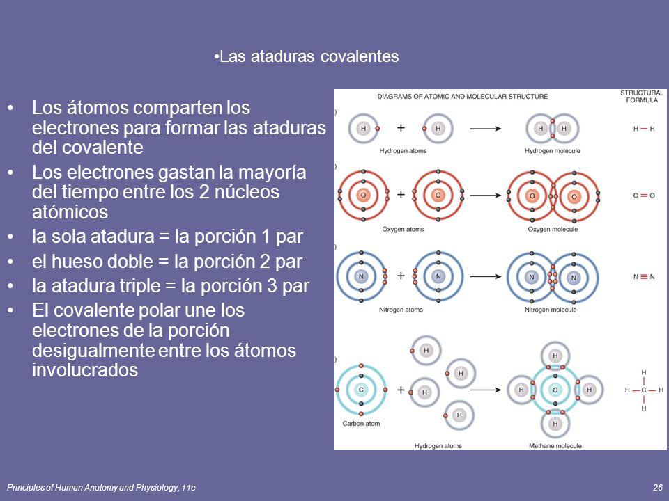 Las ataduras covalentes