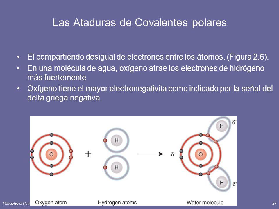 Las Ataduras de Covalentes polares