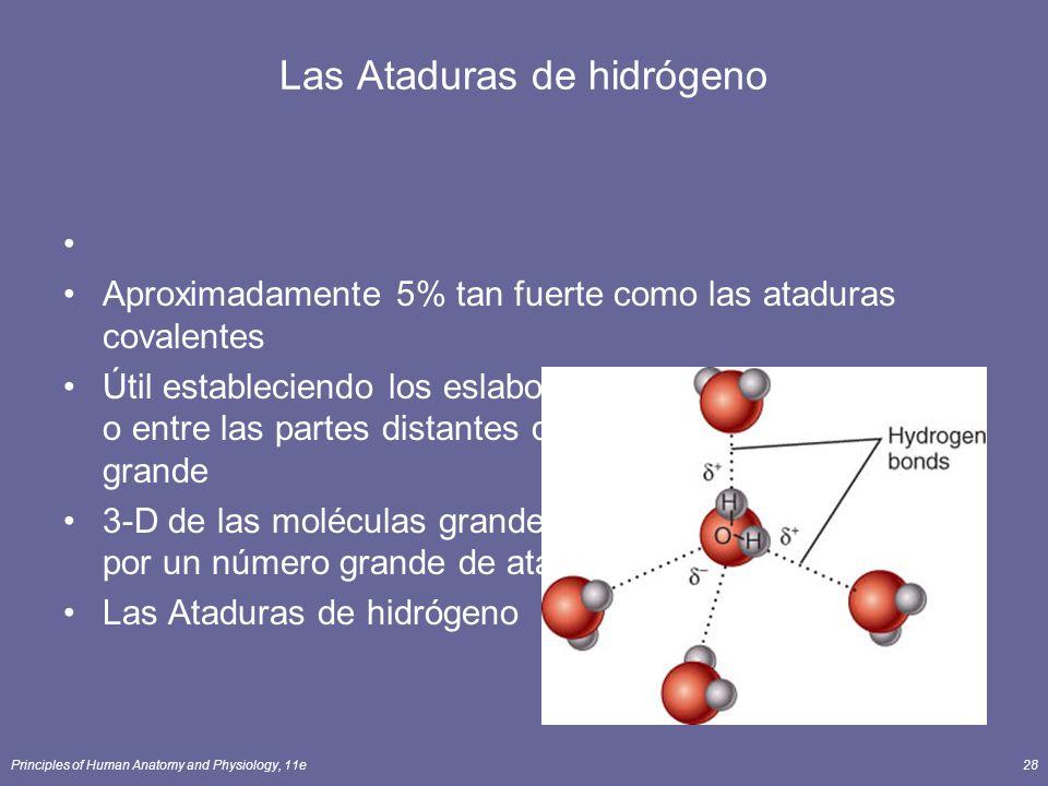 Las Ataduras de hidrógeno