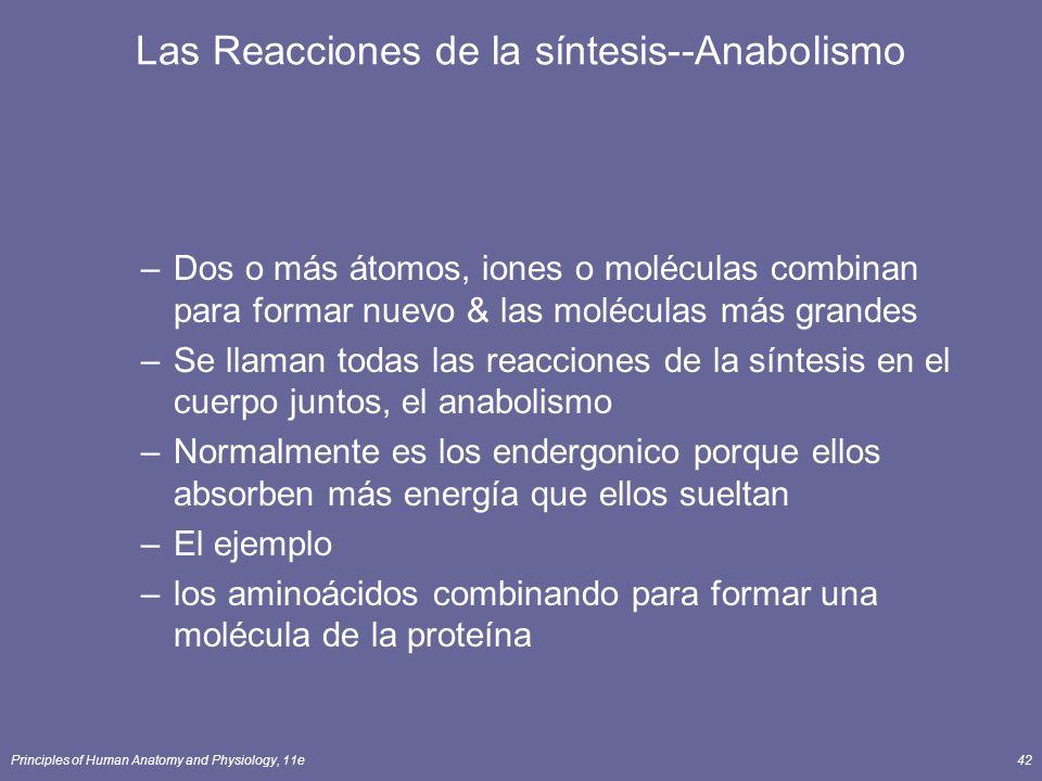 Las Reacciones de la síntesis--Anabolismo