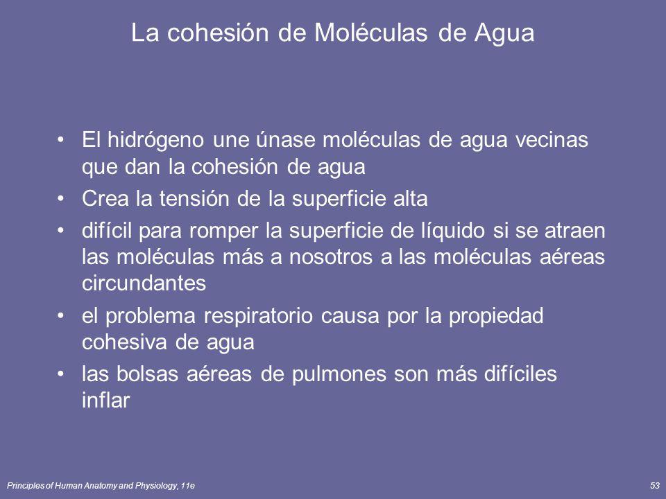 La cohesión de Moléculas de Agua