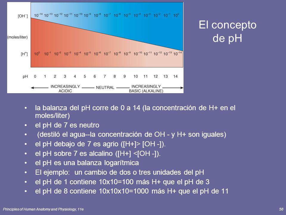 El concepto de pH la balanza del pH corre de 0 a 14 (la concentración de H+ en el moles/liter) el pH de 7 es neutro.