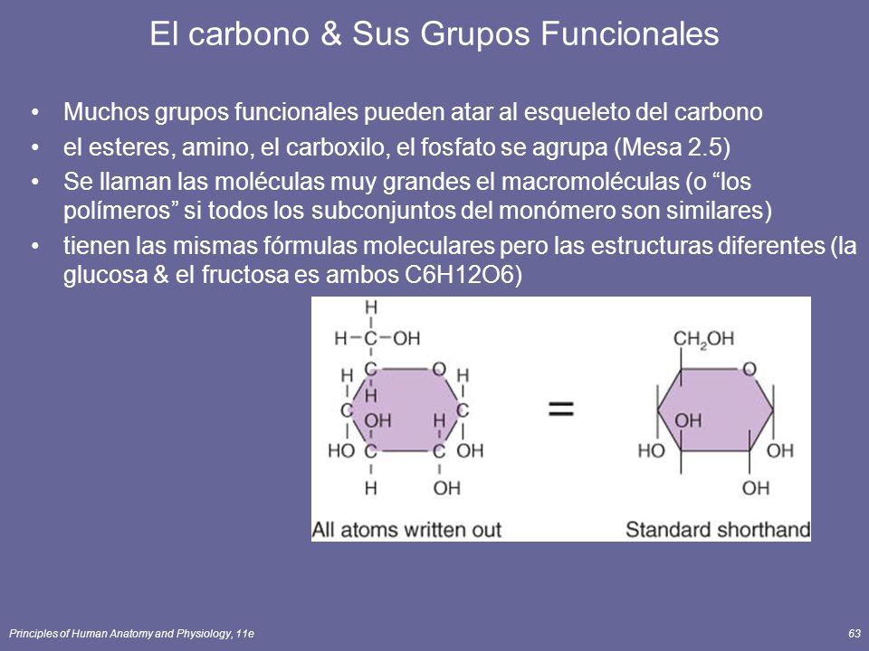 El carbono & Sus Grupos Funcionales