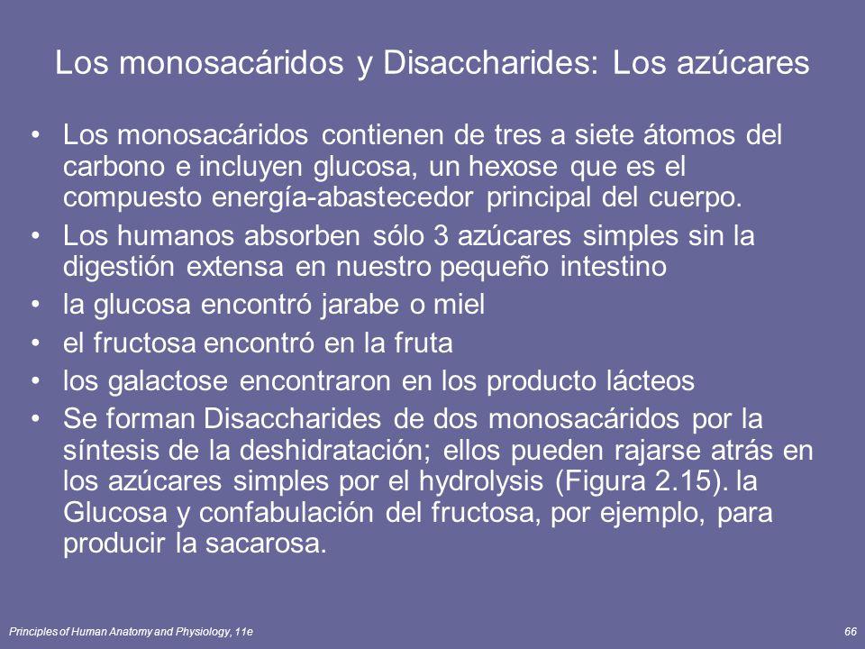 Los monosacáridos y Disaccharides: Los azúcares