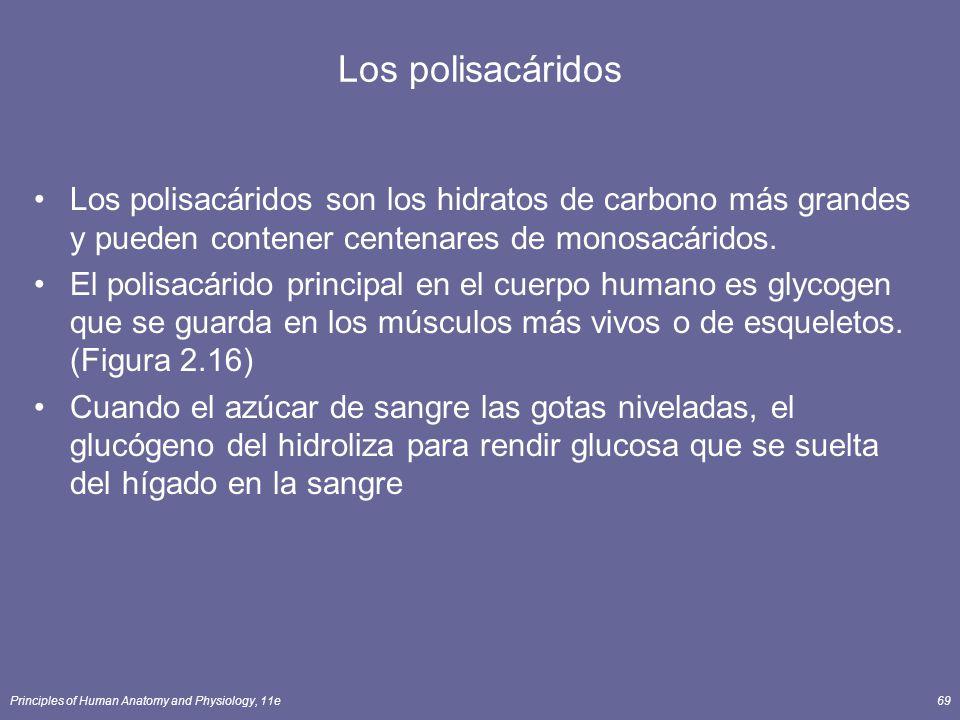 Los polisacáridos Los polisacáridos son los hidratos de carbono más grandes y pueden contener centenares de monosacáridos.