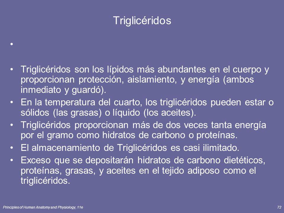 Triglicéridos Triglicéridos son los lípidos más abundantes en el cuerpo y proporcionan protección, aislamiento, y energía (ambos inmediato y guardó).