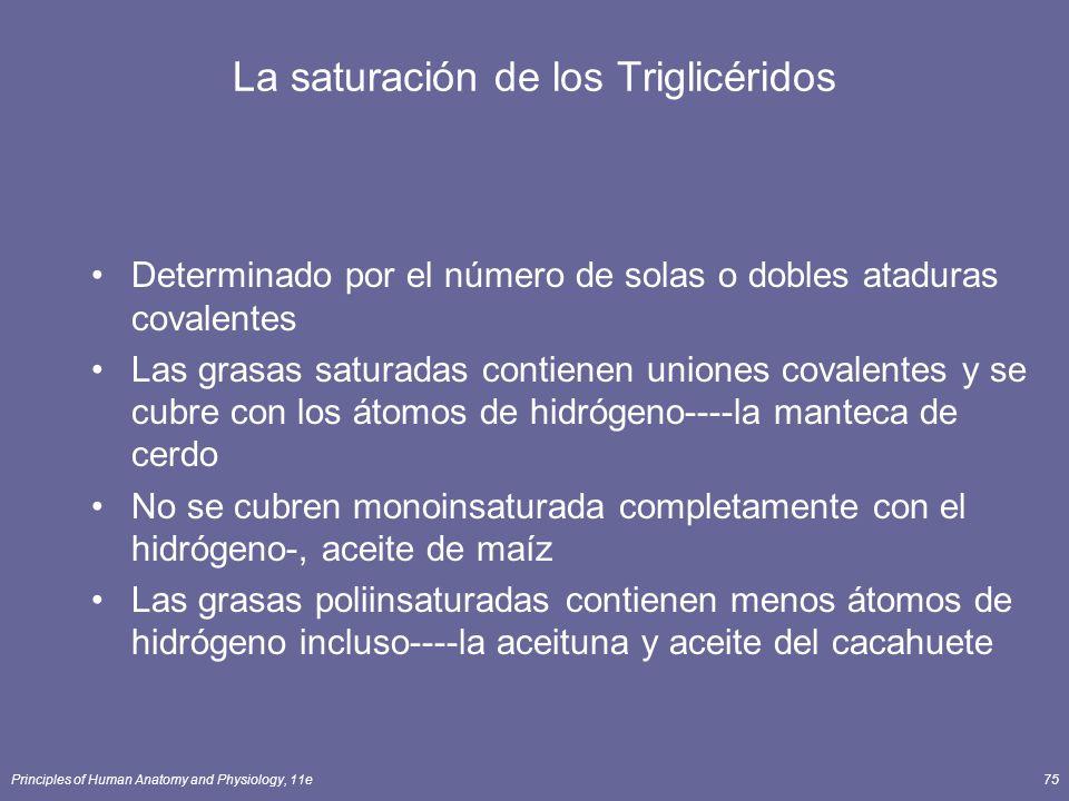 La saturación de los Triglicéridos