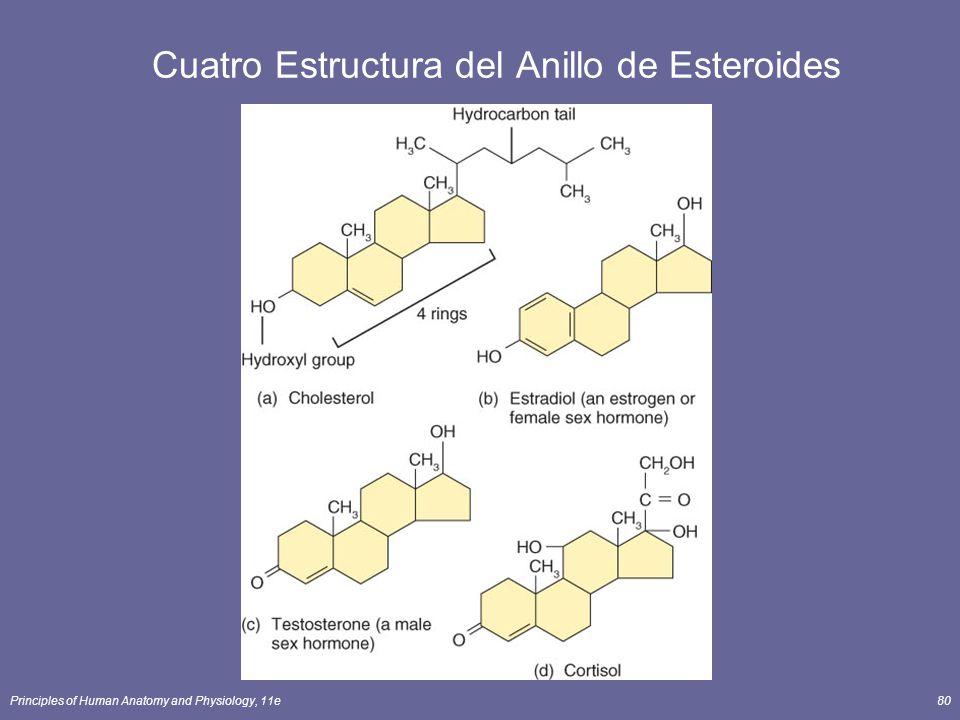 Cuatro Estructura del Anillo de Esteroides