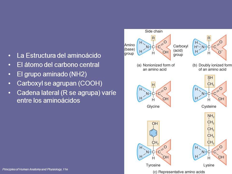 La Estructura del aminoácido El átomo del carbono central