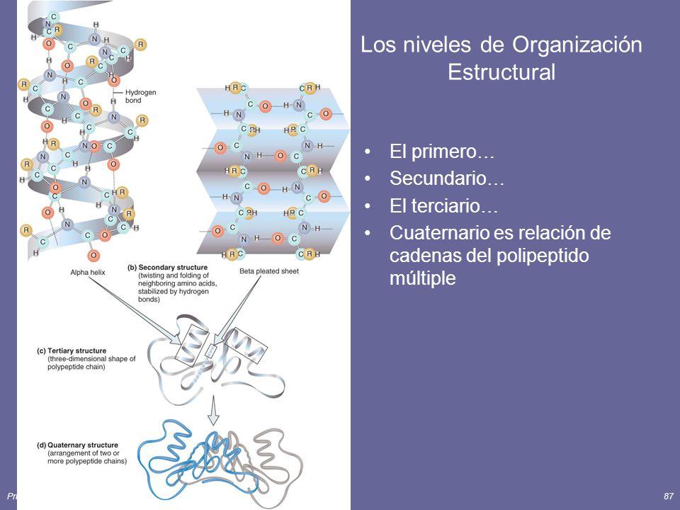 Los niveles de Organización Estructural