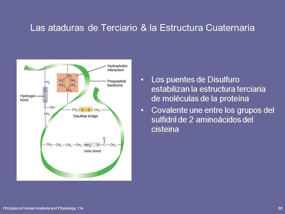 Las ataduras de Terciario & la Estructura Cuaternaria