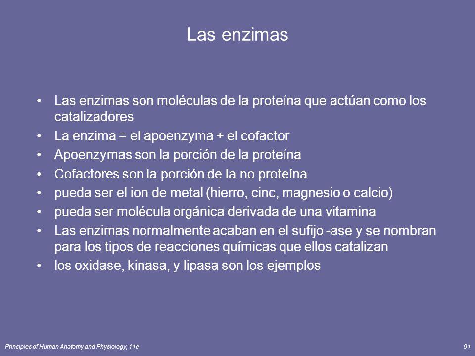 Las enzimas Las enzimas son moléculas de la proteína que actúan como los catalizadores. La enzima = el apoenzyma + el cofactor.